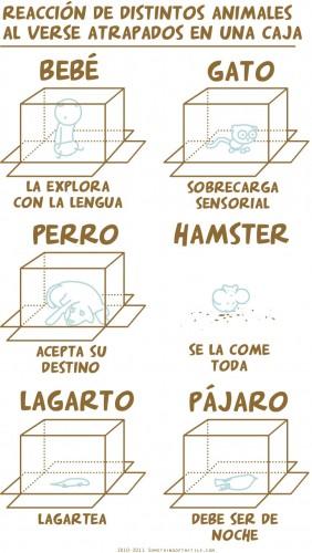 Reacción de distintos animales al verse atrapados en una caja